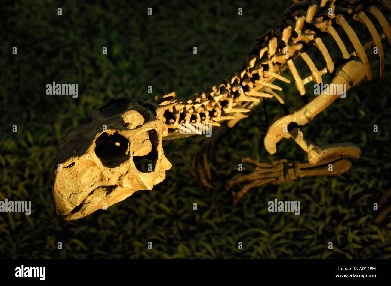 Dinosaur skeleton in a museum of Beijing, China. 2007 - Stock Image