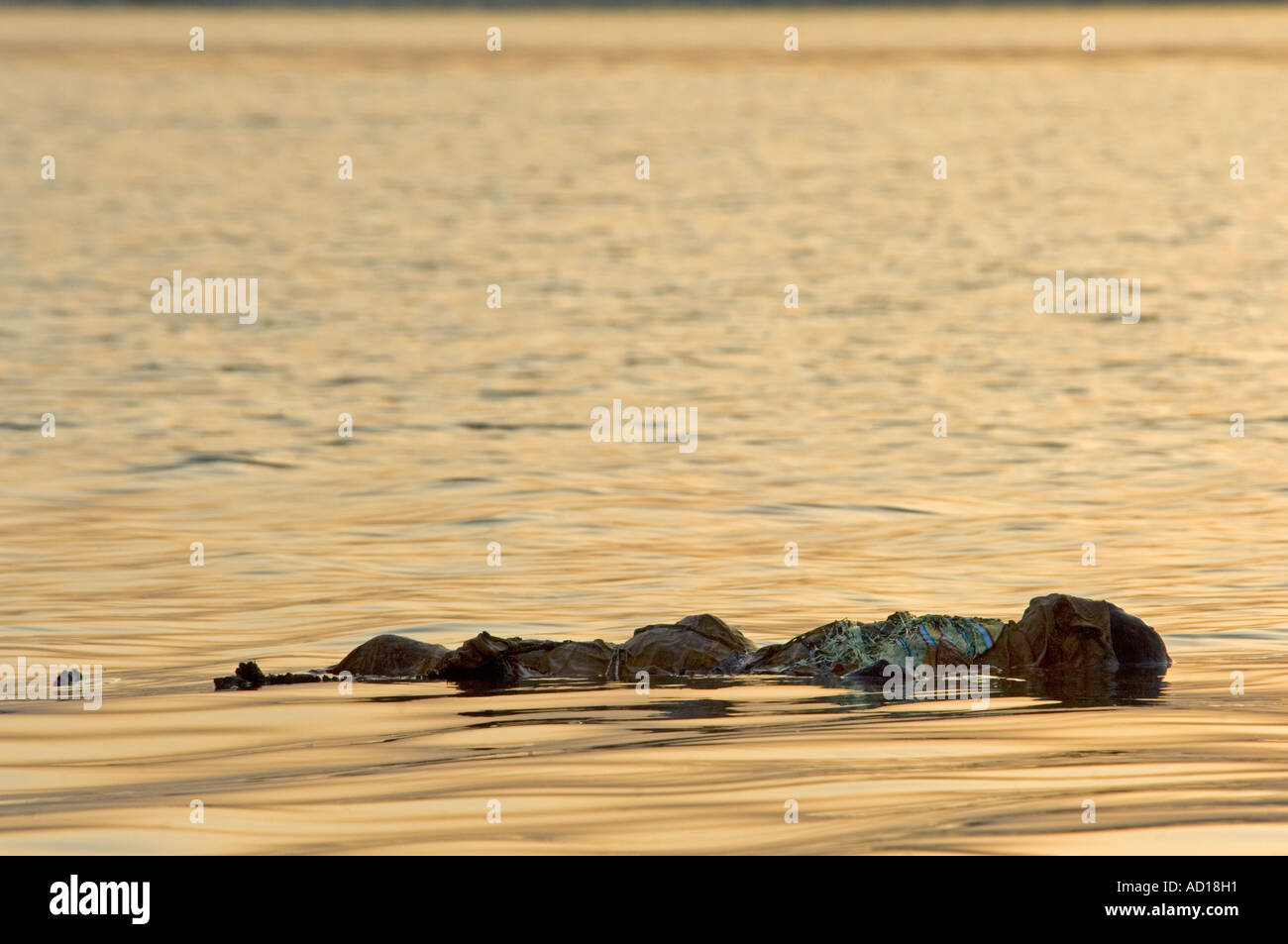 ganges river dead bodies - HD 1300×953