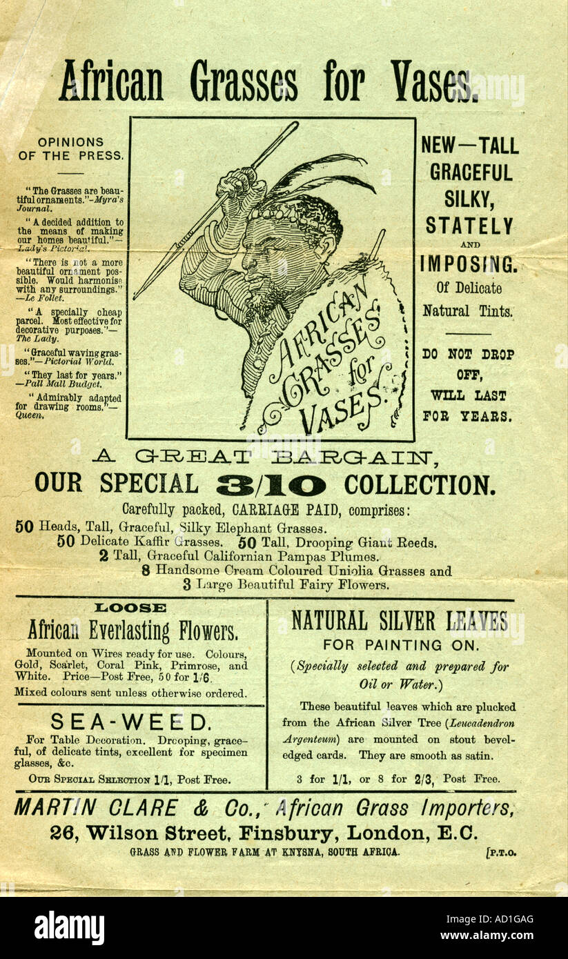 Advertising leaflet for African Grasses circa 1900 - Stock Image