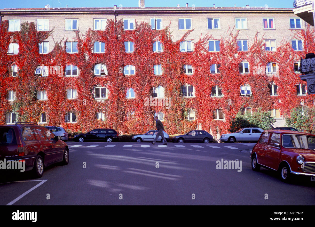 Red Ivy and cars on Waldemar Thranes Gate in the St hanshaugen area of Oslo - Stock Image