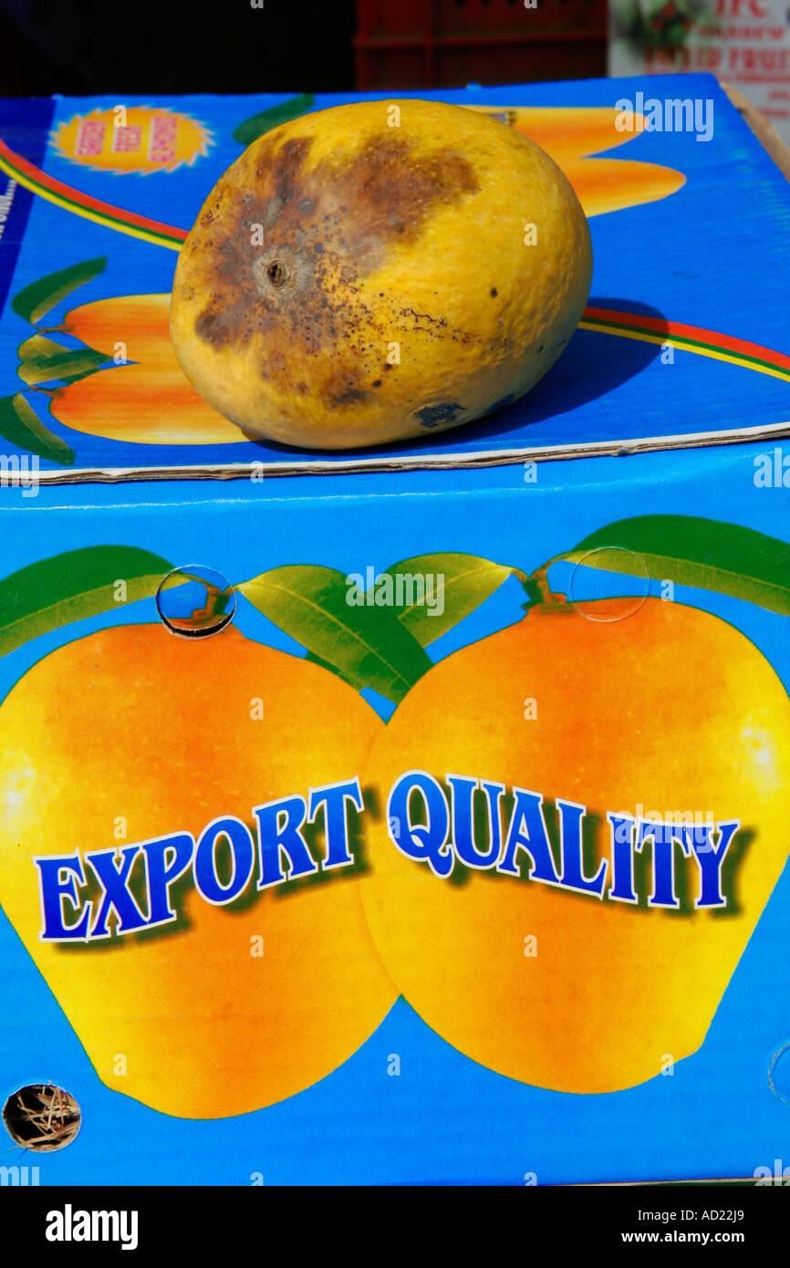 SSK71678 Fruit Alphonso spoilt mango removed from export