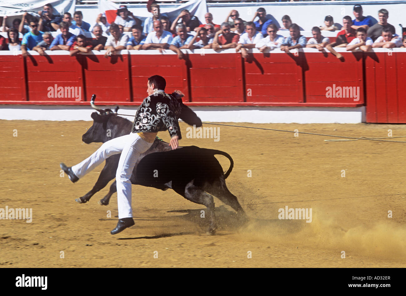Course Landaise, a form of bloodless bullfighting where young men in boleros face frisky cows Stock Photo