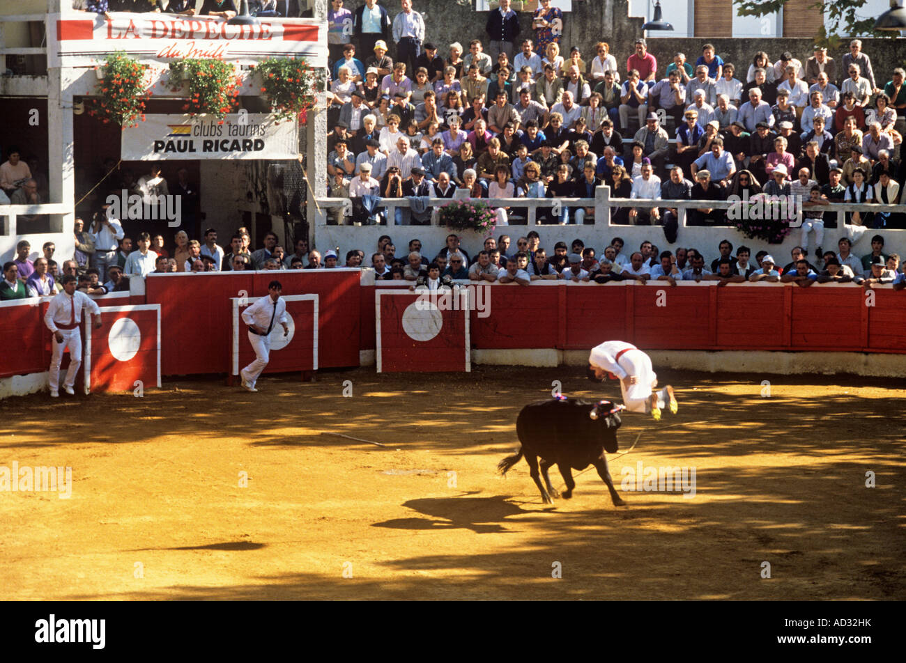 In Course Landaise sporting thrills include athletic young men, sauteurs, leaping or somersaulting over a charging Stock Photo