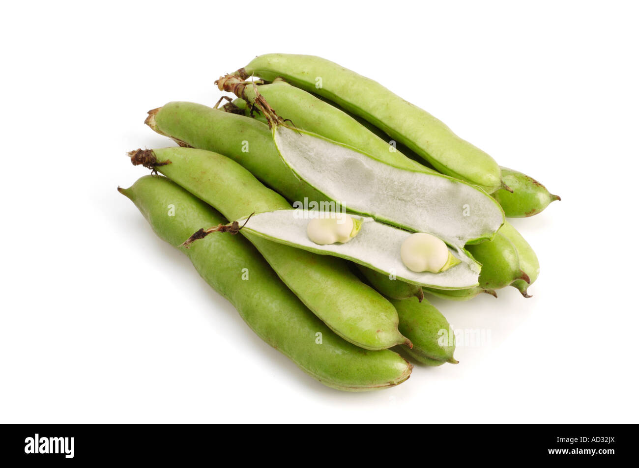 Broad, or Fava, Beans - Stock Image