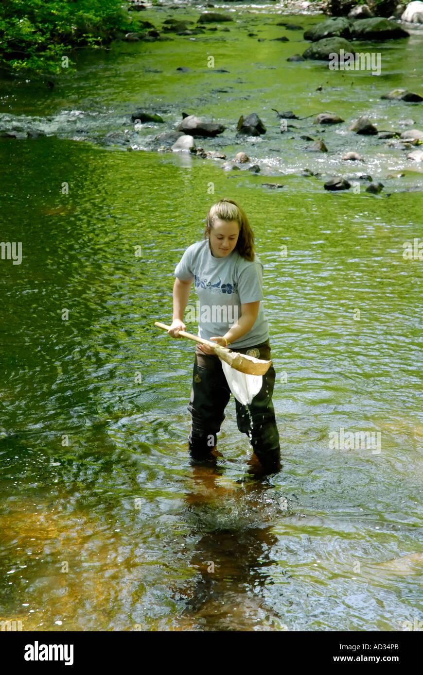 Teenage girl using net sampling river water for fish and invertebrate biological indicators of water quality - Stock Image