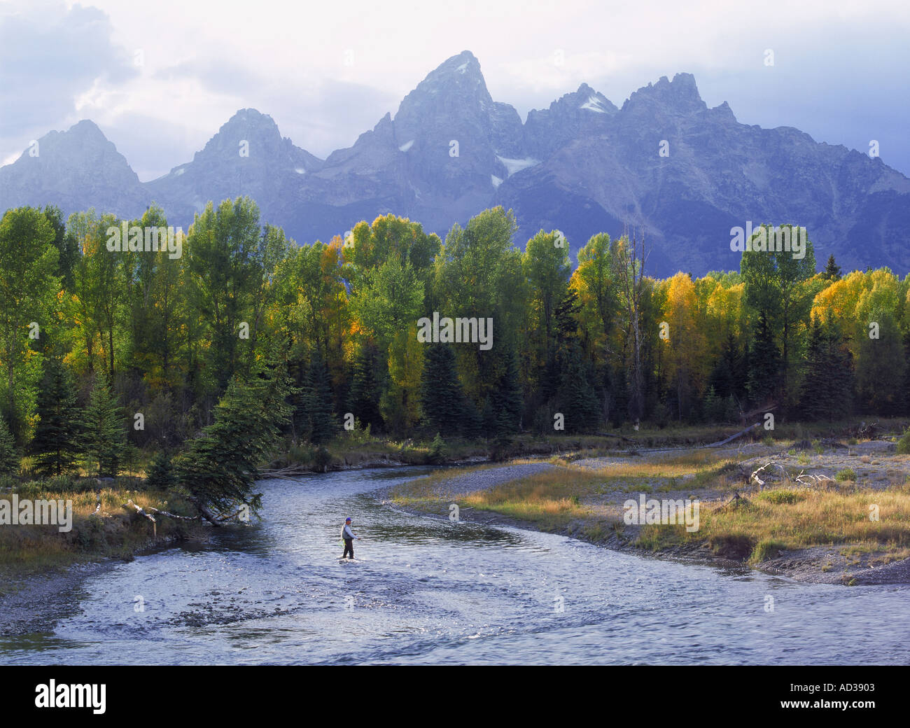 fly fishing in autumn on the snake river below grand tetons in stock