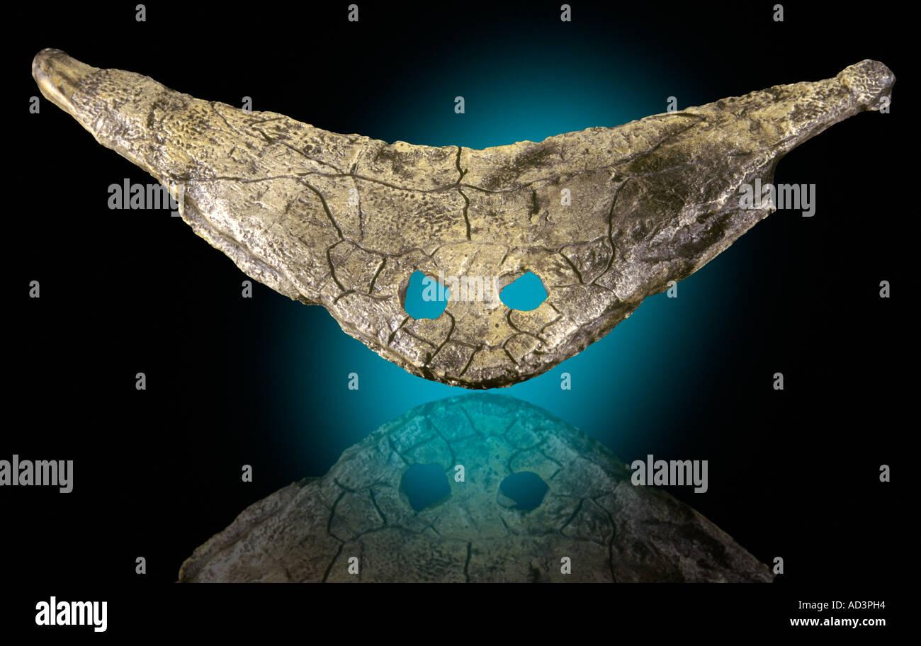 Primative Amphibian Diplocaulis magnicornis Lower Permian Baylor Co Texas - Stock Image