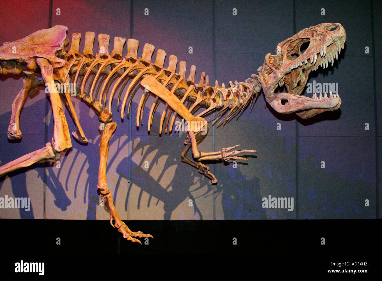 Skeletal structure replica of Tyrannosaurus Rex dinosaur-Royal Tyrrell Museum, Drumheller, Alberta, Canada - Stock Image