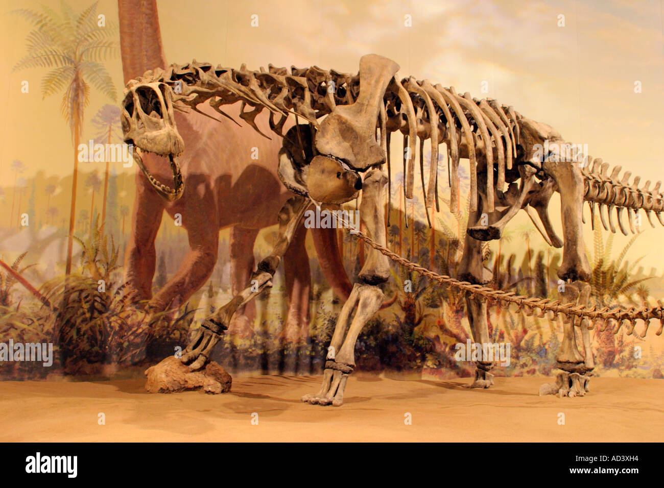 Lifesize replica of skeletal structure of Camarasaurus dinosaur from Royal Tyrrell Museum, Drumheller, Alberta, Canada. - Stock Image