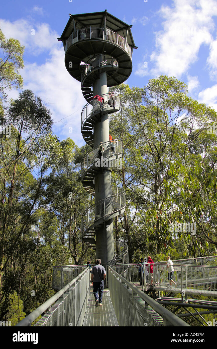 Otway Fly Tree Top Walk in the rainforest, Victoria, Australia Stock Photo