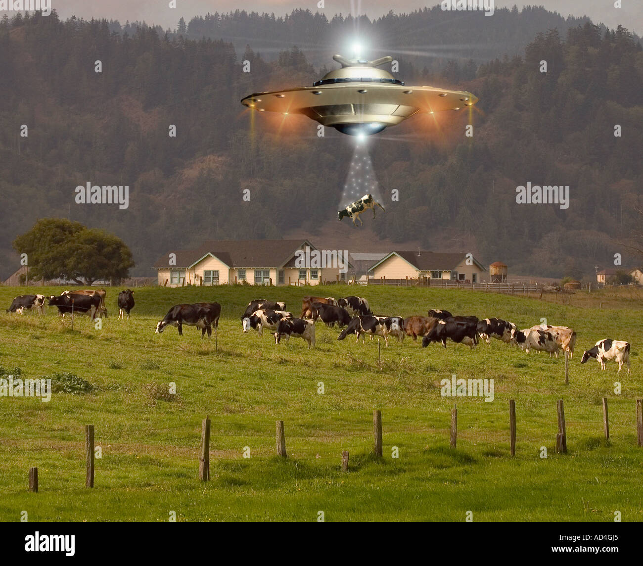 Extraterrestrial cow abduction. - Stock Image