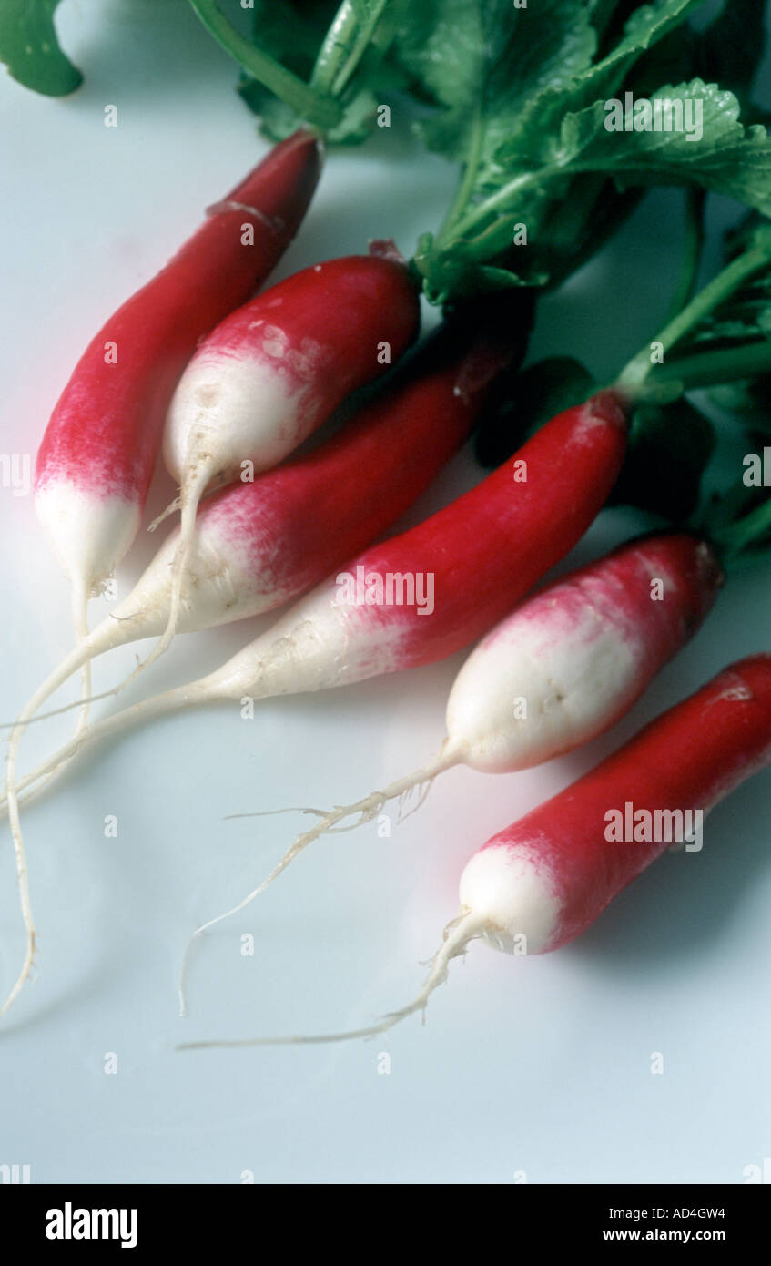 Radishes variety Raphanus sativus French breakfast - Stock Image