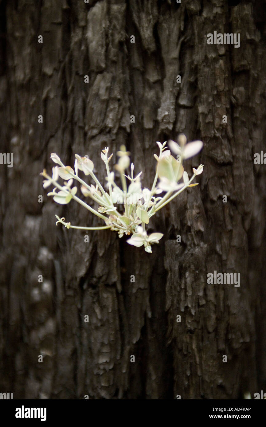A new shoot growing from a tree trunk Stock Photo