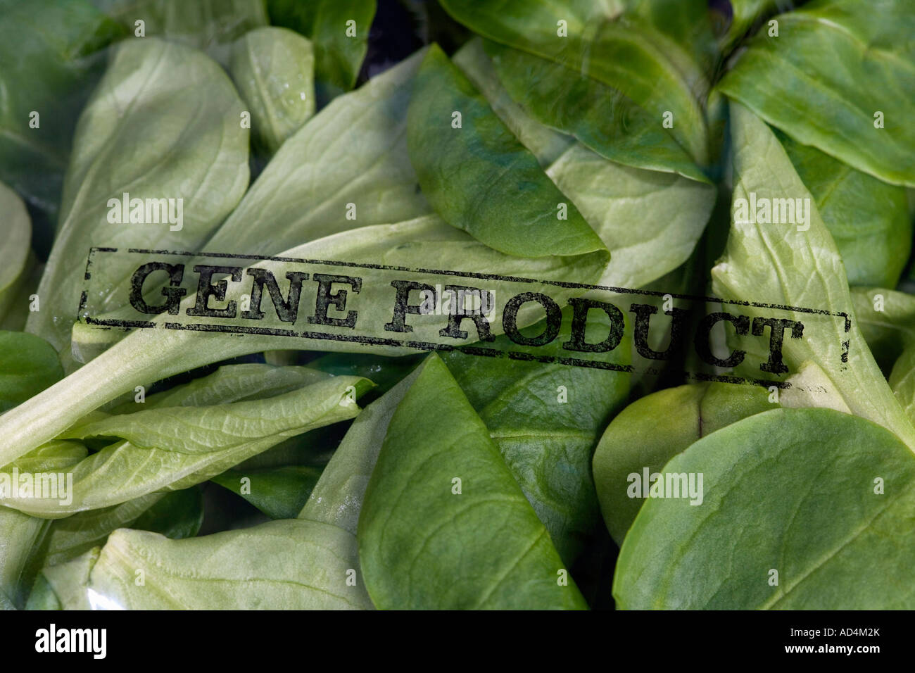 A packet of corn salad stamped 'Gene Product' - Stock Image