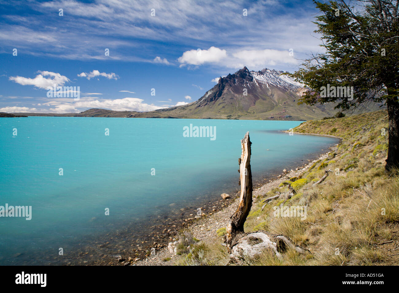 Tree stump lake belgrano Cerro Mie - Stock Image