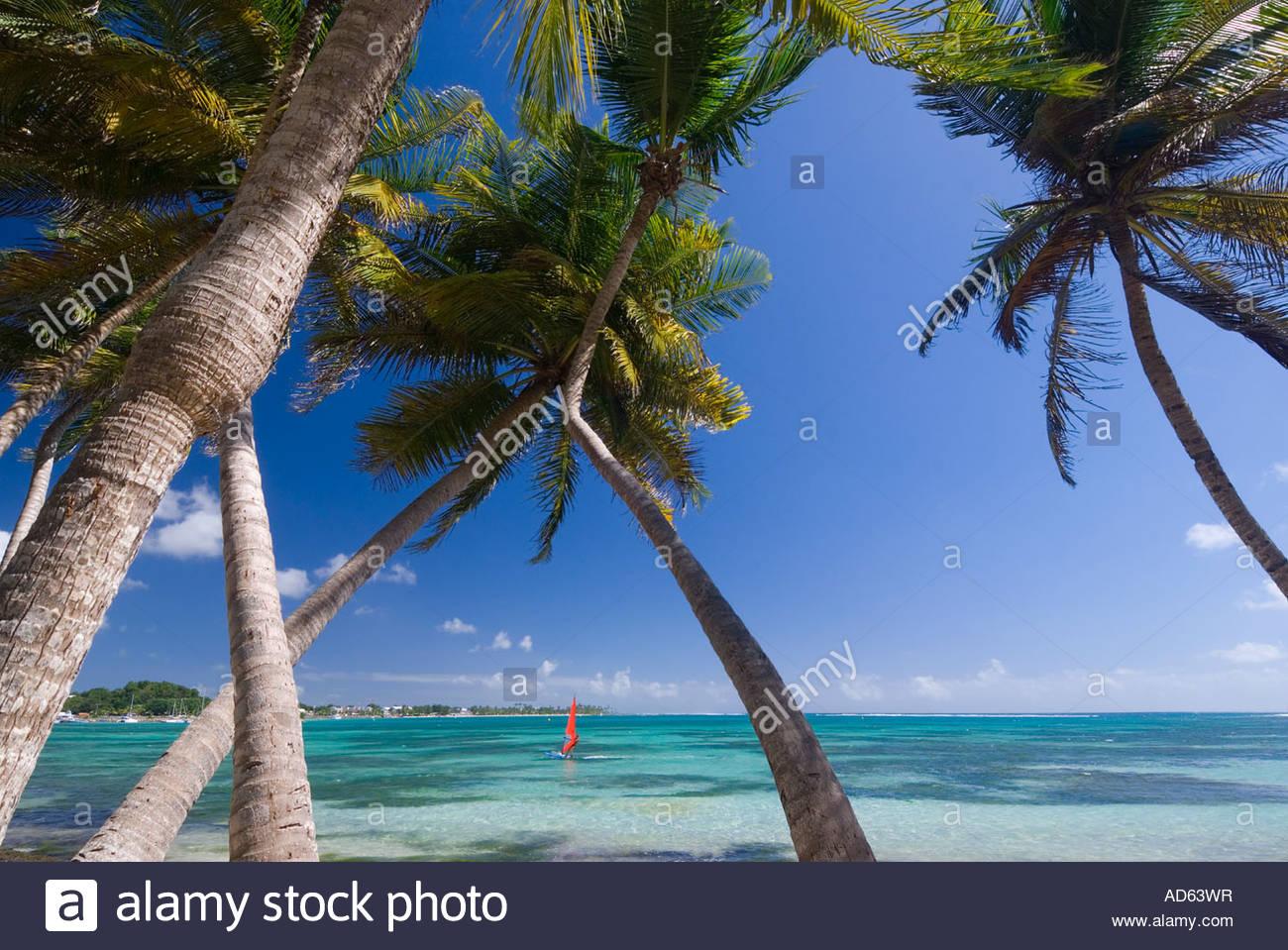 Palm trees and windsurfer at La Plage de la Caravelle, Grande Terre, Guadeloupe - Stock Image