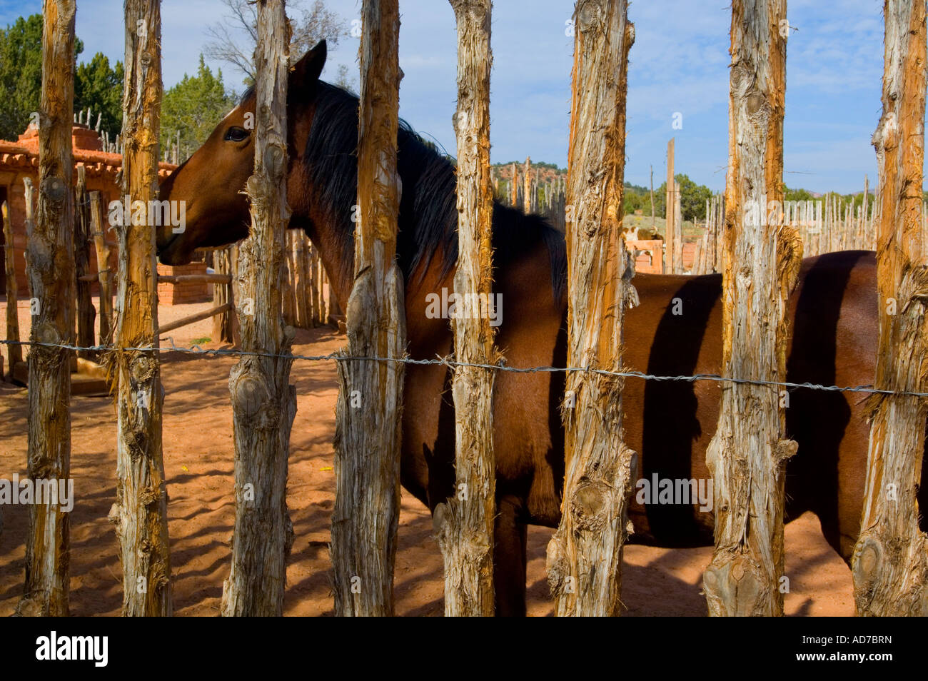 Horse Behind Wooden Corral Fence Pipe Springs National
