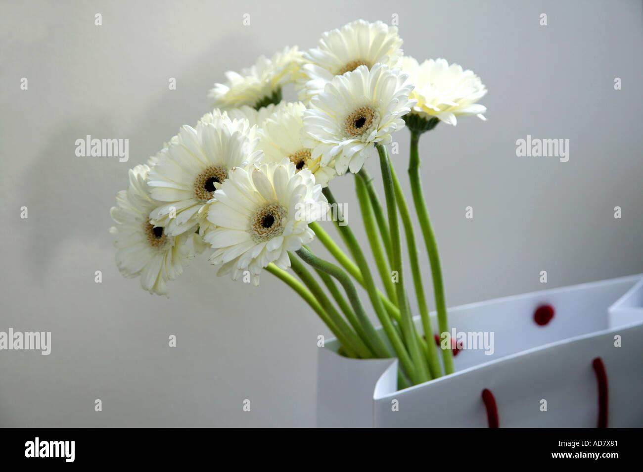 Bunch of white gerbera flowers in carrier bag stock photo 4353664 bunch of white gerbera flowers in carrier bag mightylinksfo