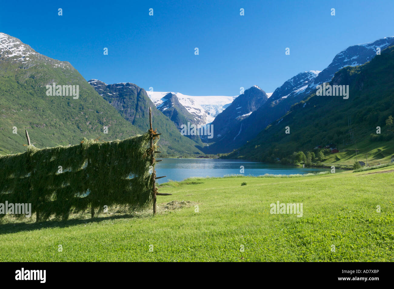 Hay drying on racks next to Oldevatnet Oldedalen near Olden Stryn Sogn og Fjordane Norway - Stock Image