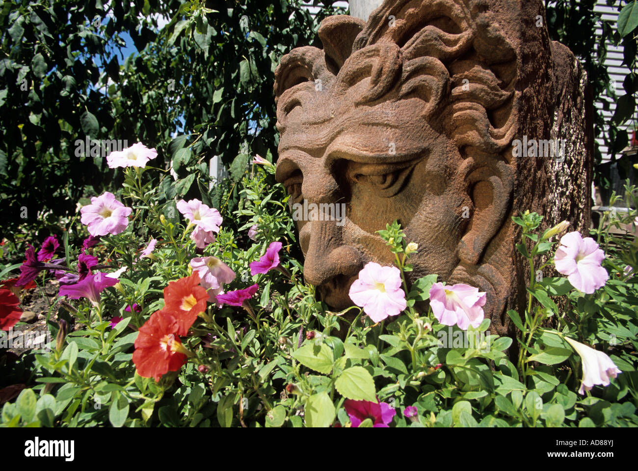 ANTIQUE KETTLE RIVER SANDSTONE GARGOYLE SURROUNDED BY PETUNIAS Stock ...