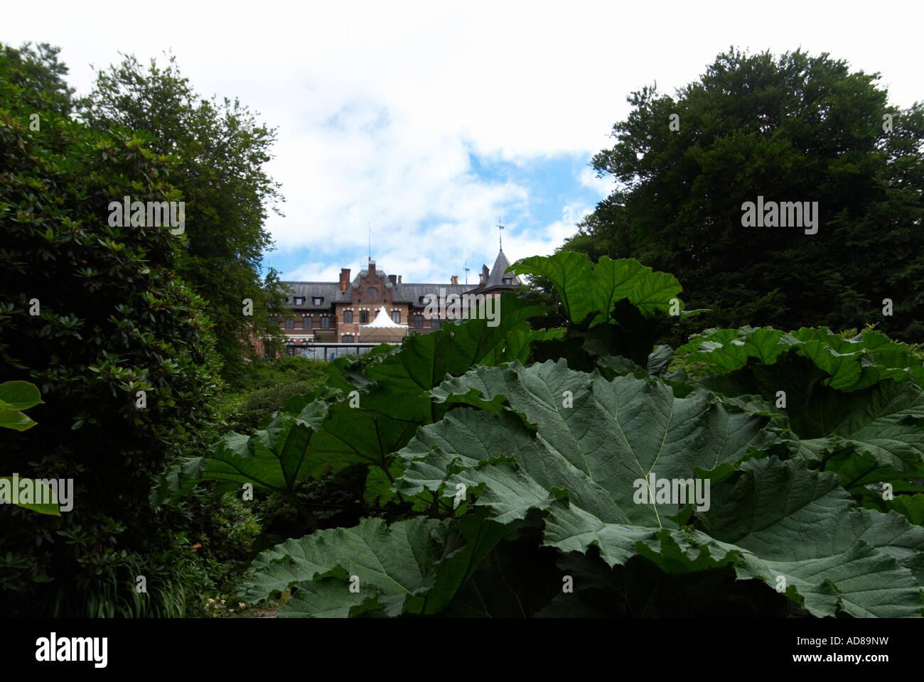 Växter Stock Photos & Växter Stock Images - Alamy