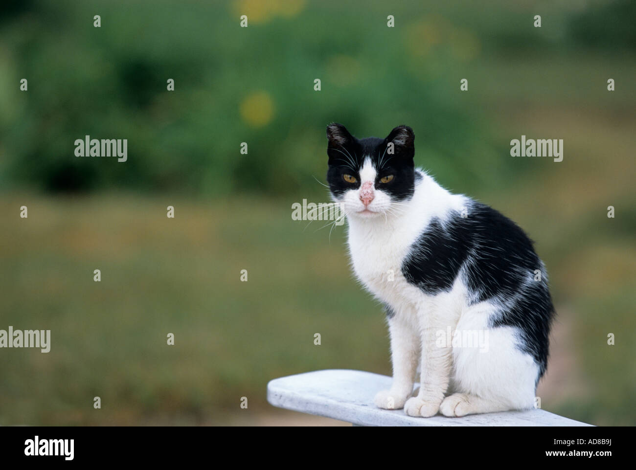 Feline Cat Black White Stock Photos & Feline Cat Black White Stock ...