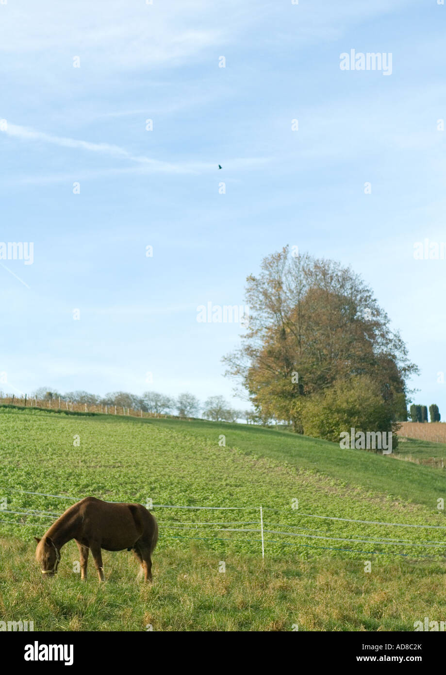 Horse grazing in green pasture Stock Photo