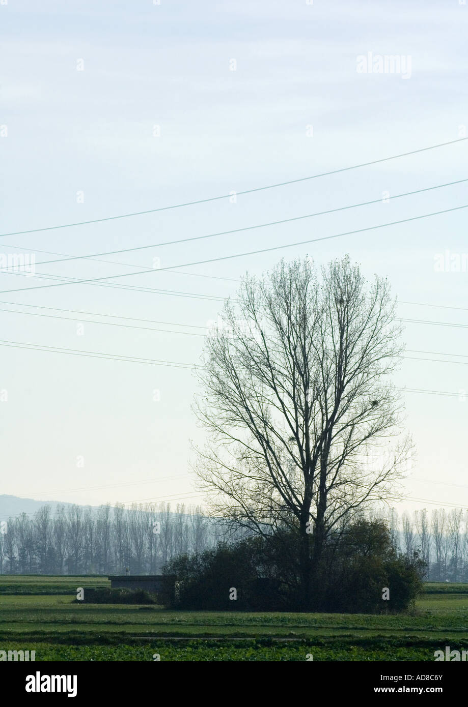 Trees and bushes in rural landscape under electric lines - Stock Image