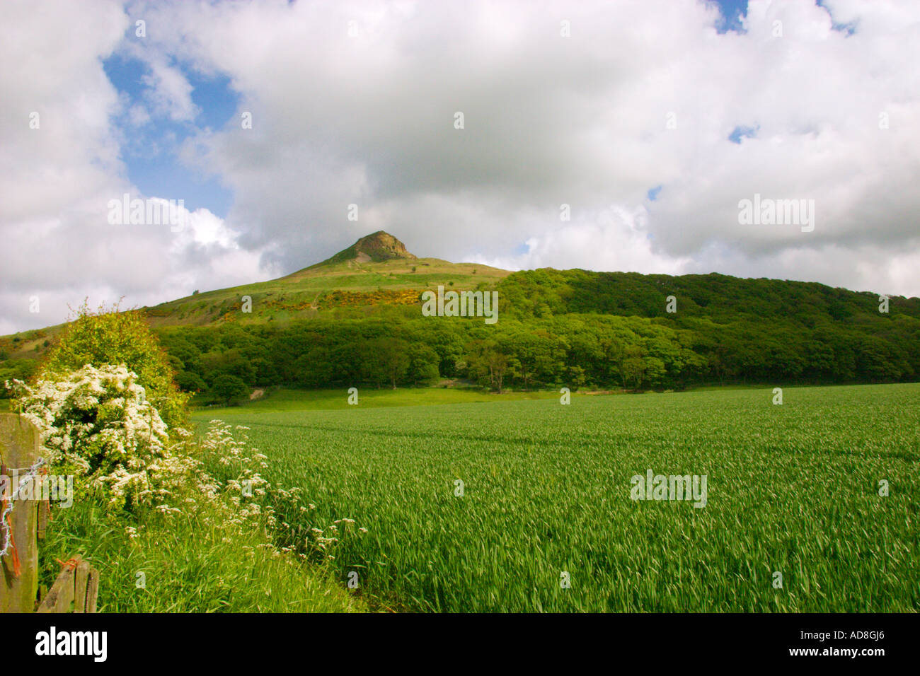 Roseberry Topping North Yorks Moors UK - Stock Image