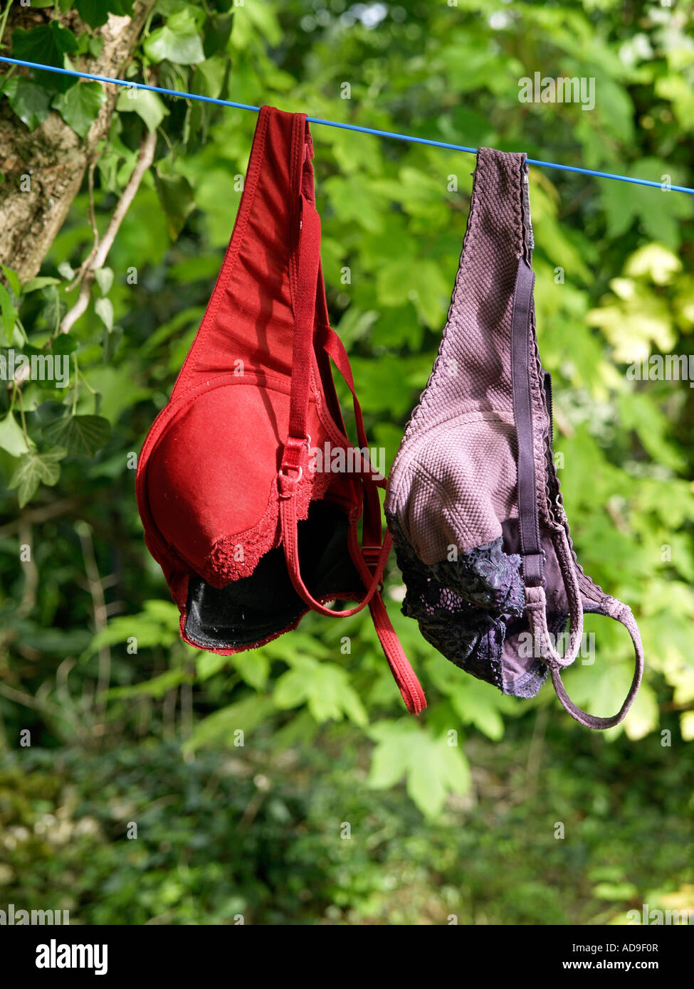 laundry two bras haning on clothesline - Stock Image