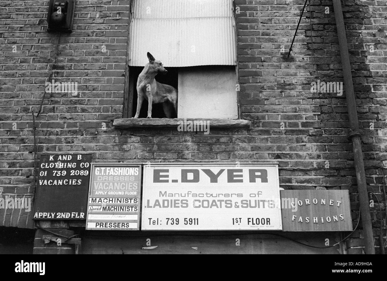 Sweat shop sign board and dog Whitechapel near Brick lane East London England 1974 1970s HOMER SSYKES - Stock Image