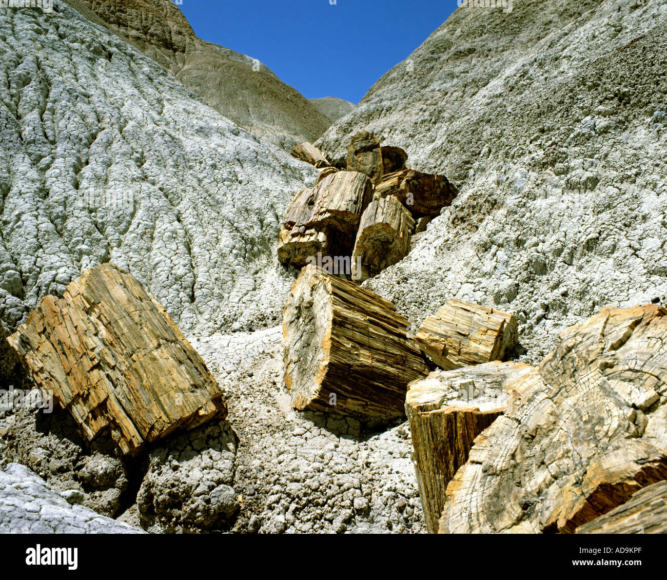 USA - ARIZONA: Petrified logs at Blue Mesa in Petrified Forest National Park - Stock Image