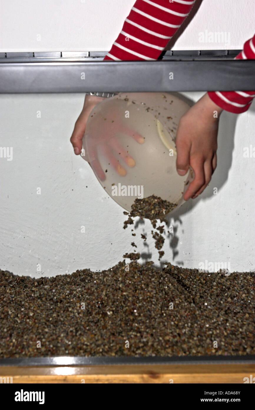 constructing an aquarium; child dumping pebbles in the empty aquarium - Stock Image