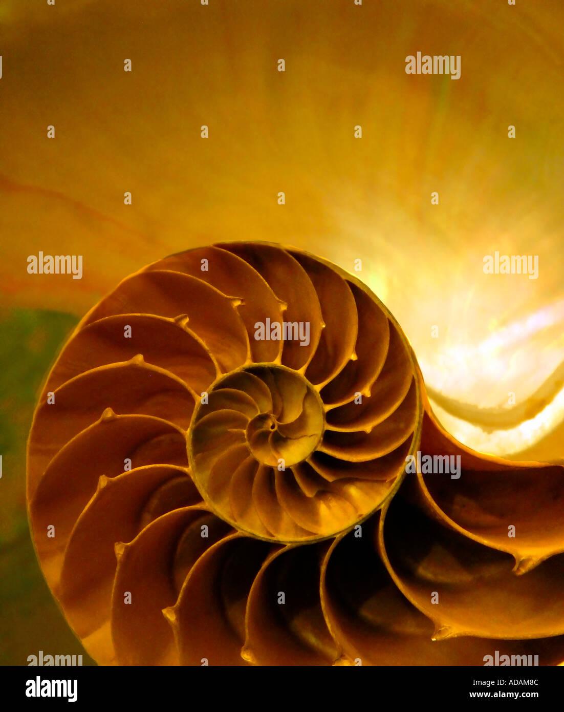 Seashell Shell Spiral Spiraling Stock Photos Seashell Shell Spiral