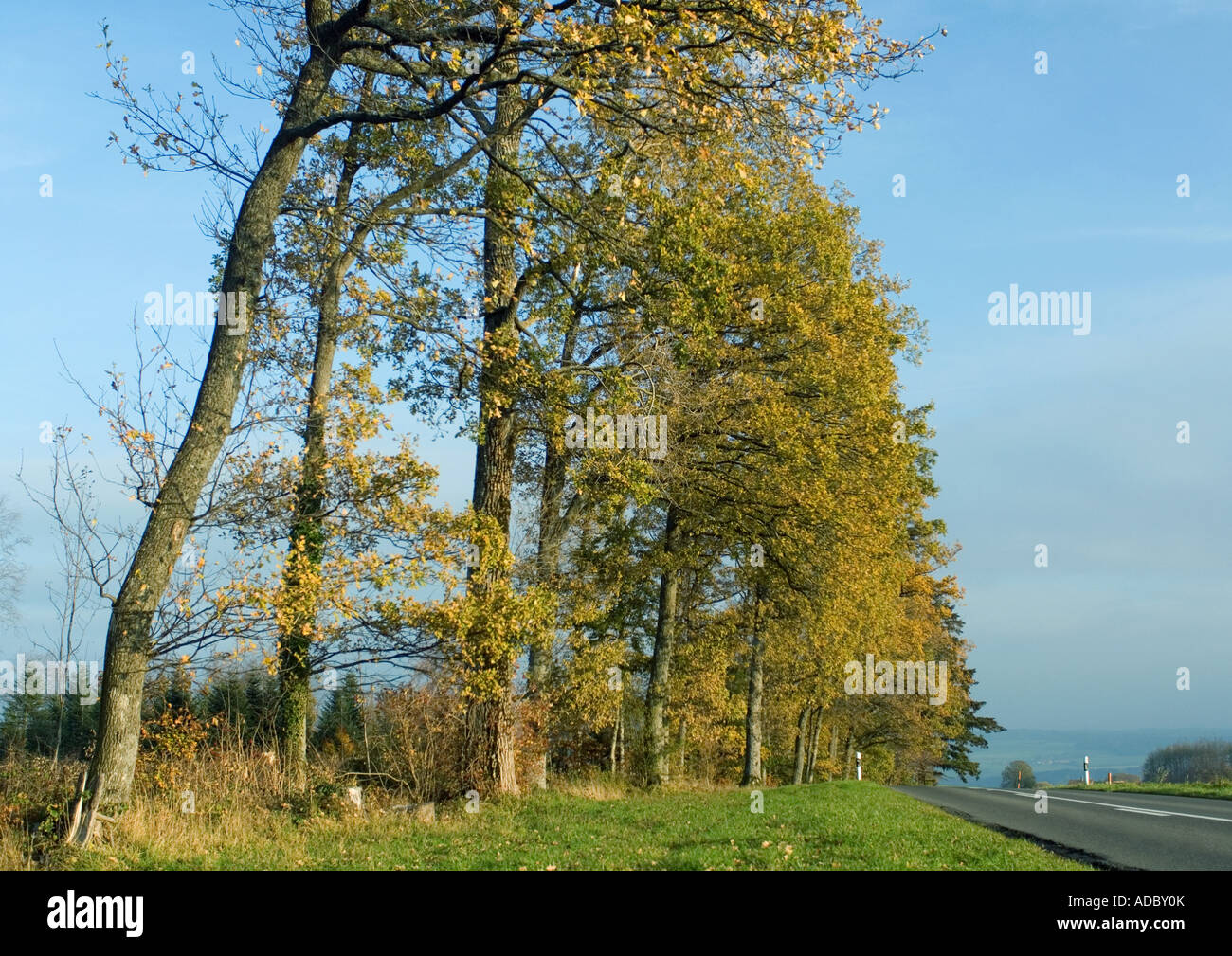Switzerland, trees and road - Stock Image