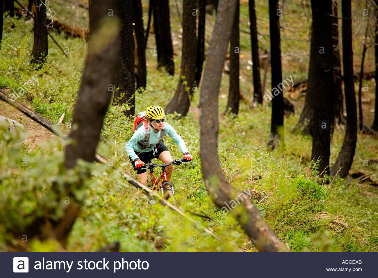 Woman mountain biking through the burned out forest along the Methow River Methow Valley Washington - Stock Image
