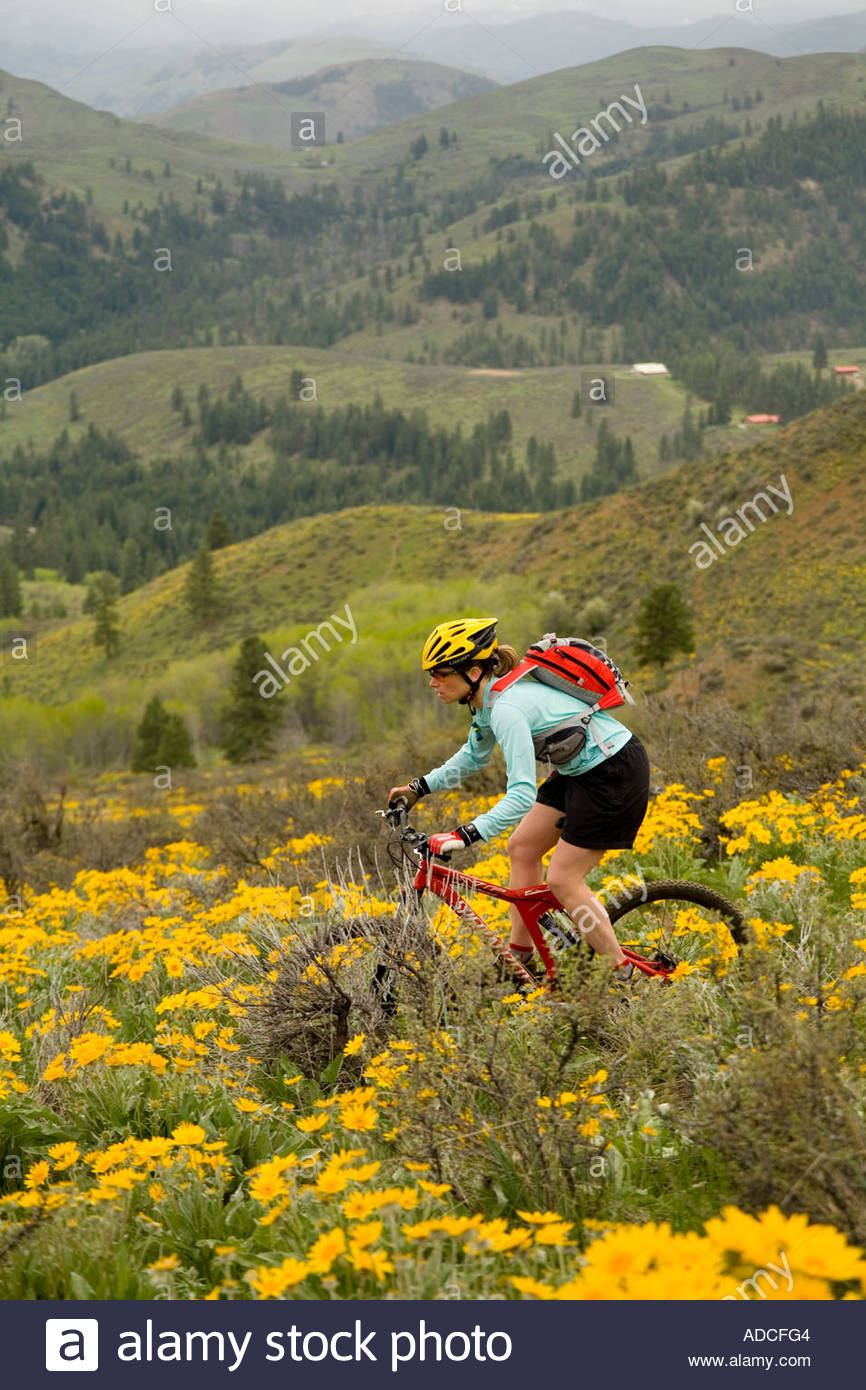 Woman mountain biking through the spring balsamroot on Buck Mountain Methow Valley Washington - Stock Image