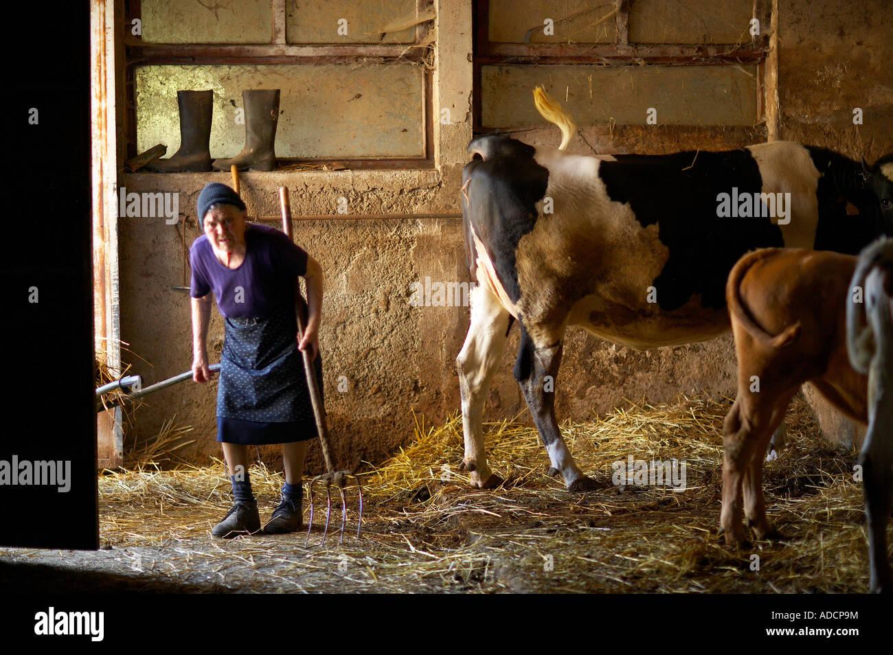 woman in a milking parlour on a farm near Preci Umbria Italy NR - Stock Image