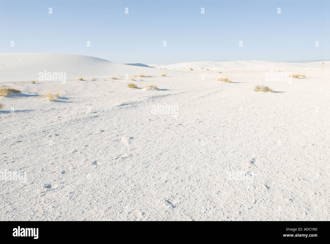 Dunes with sparse vegetation at White Sands National Monument - Stock Image