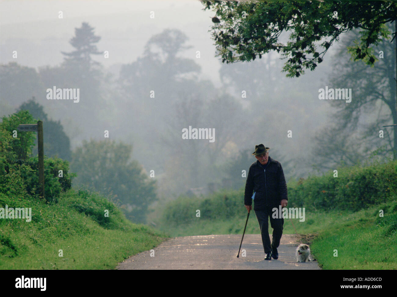 Old Man Walking Dog On Misty Morning In The English