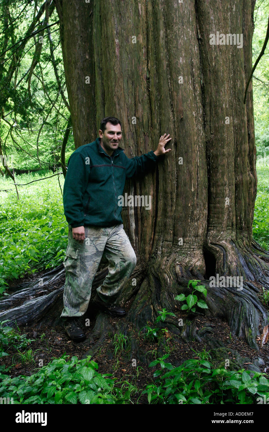 Mike Deakin, Hamble Estate's head gamekeeper with a yew tree that is over 900 years old and is mentioned in the Domesday Book - Stock Image