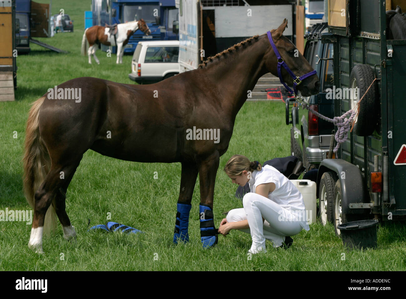 A young rider prepares her horse for travel after competing at the South Oxfordshire Riding Club's Open Show - Stock Image