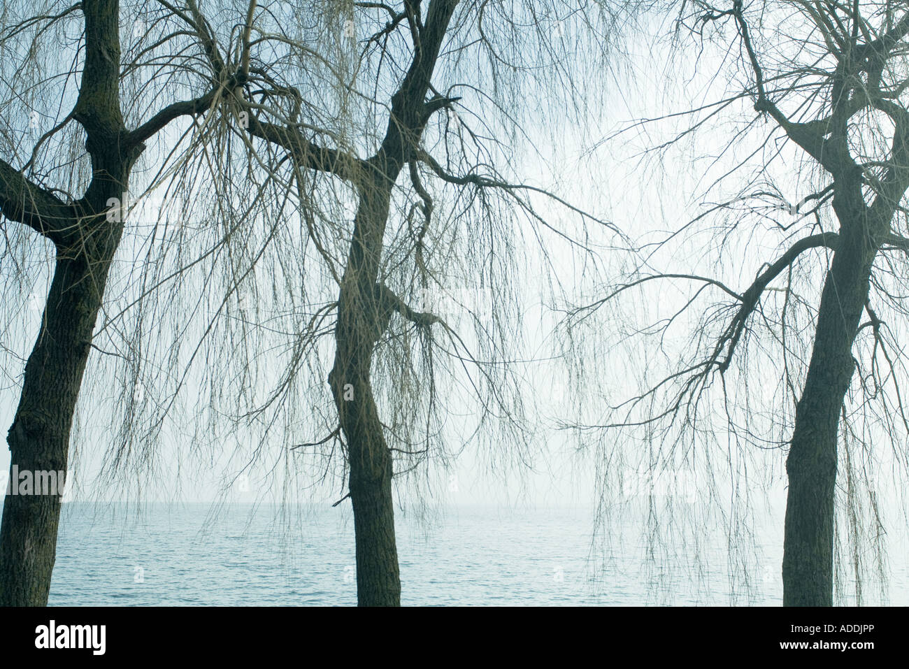 Bare trees, water in background - Stock Image