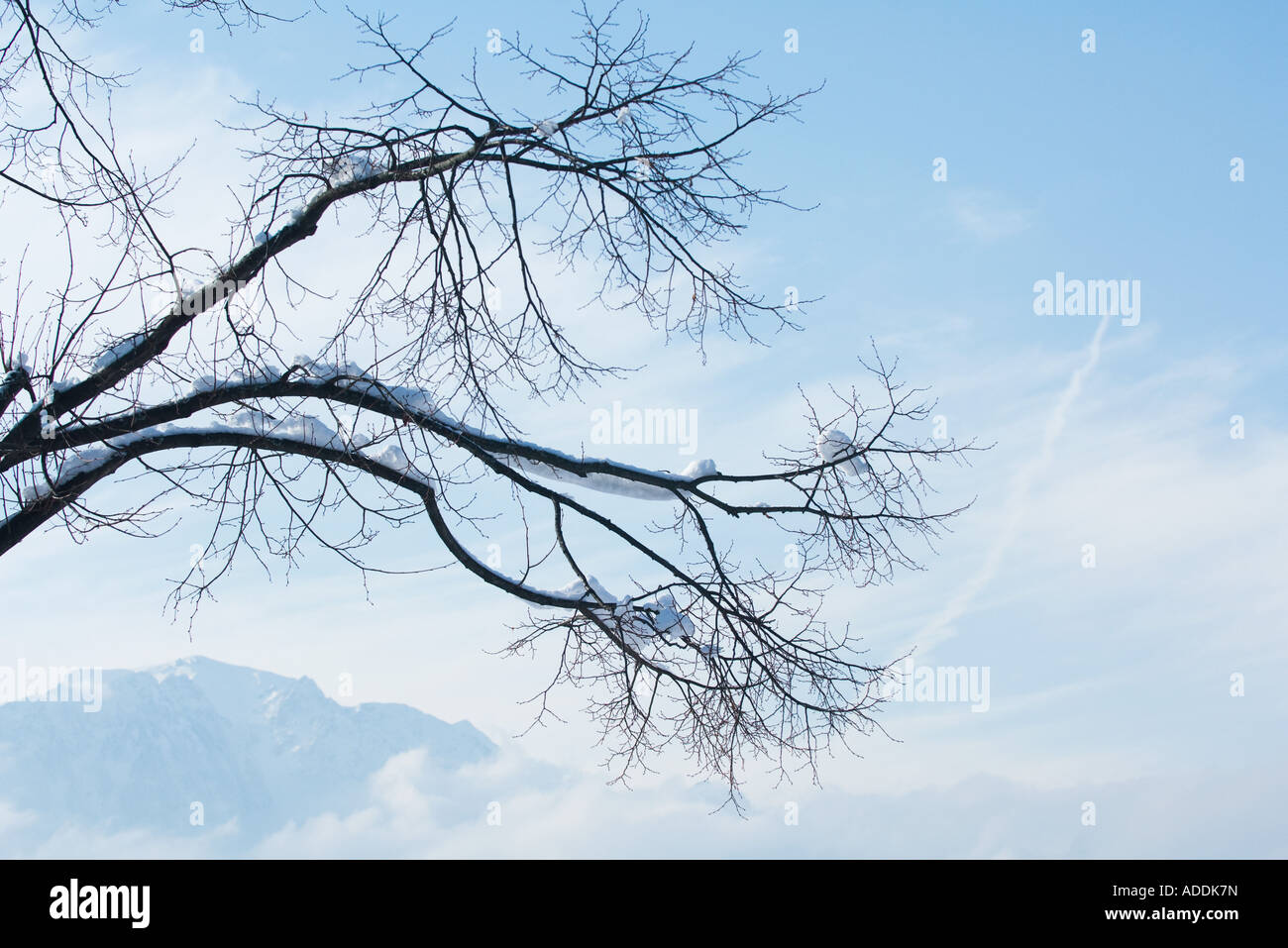 Snow-covered branches, mountains and clouds in background - Stock Image