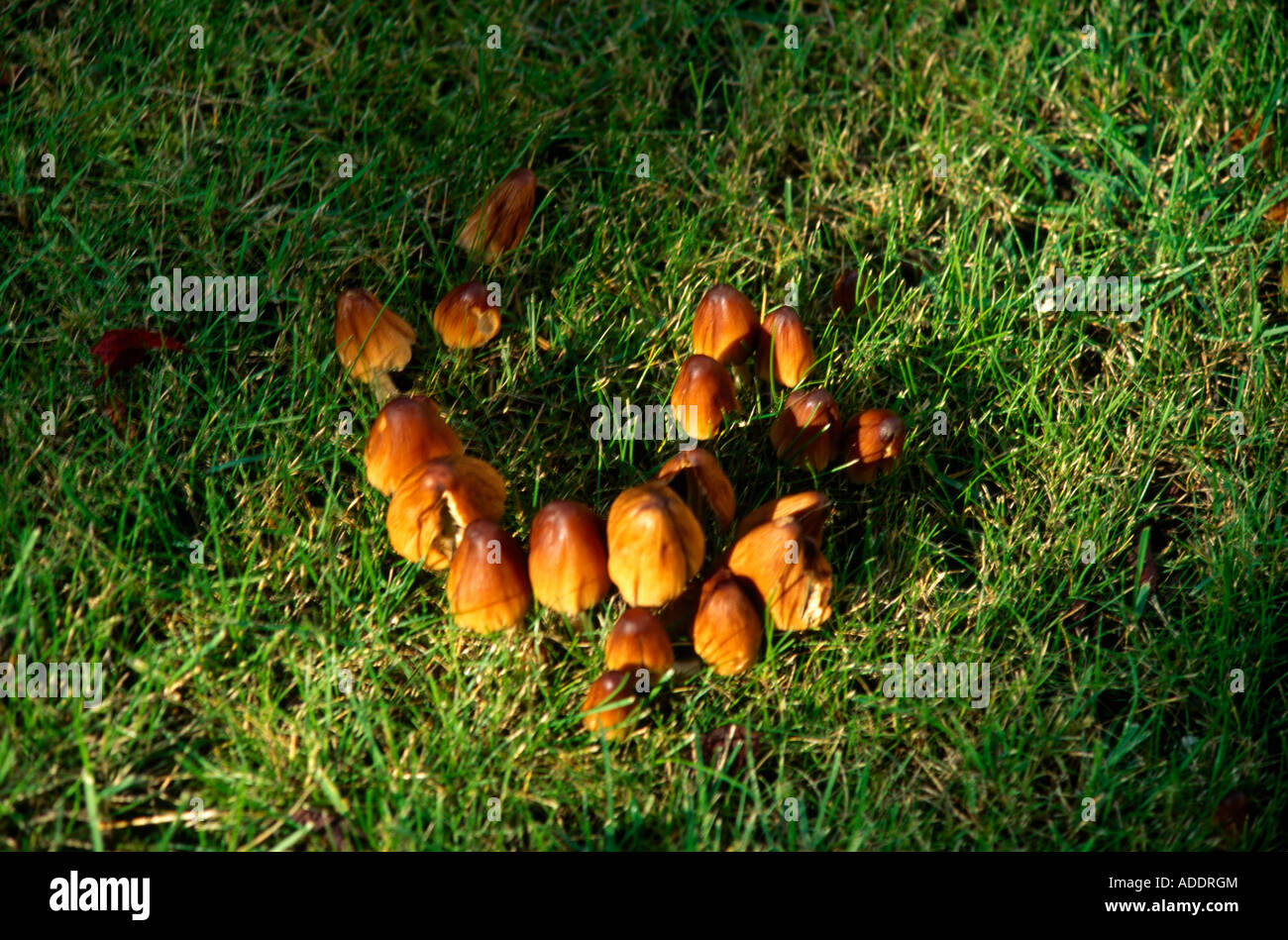 Toadstools Stock Photos Amp Toadstools Stock Images Alamy