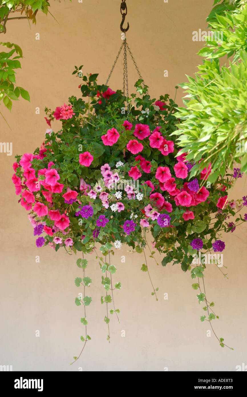 Purple And Pink Flowers In Summer Hanging Basket Against A Suffolk
