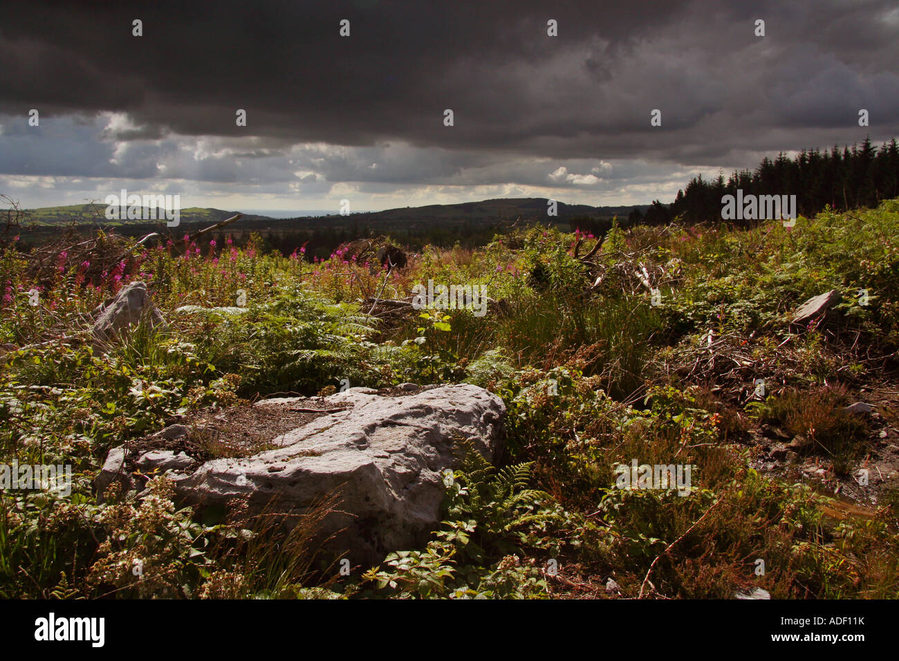 North wales Forestry comission land scape - Stock Image