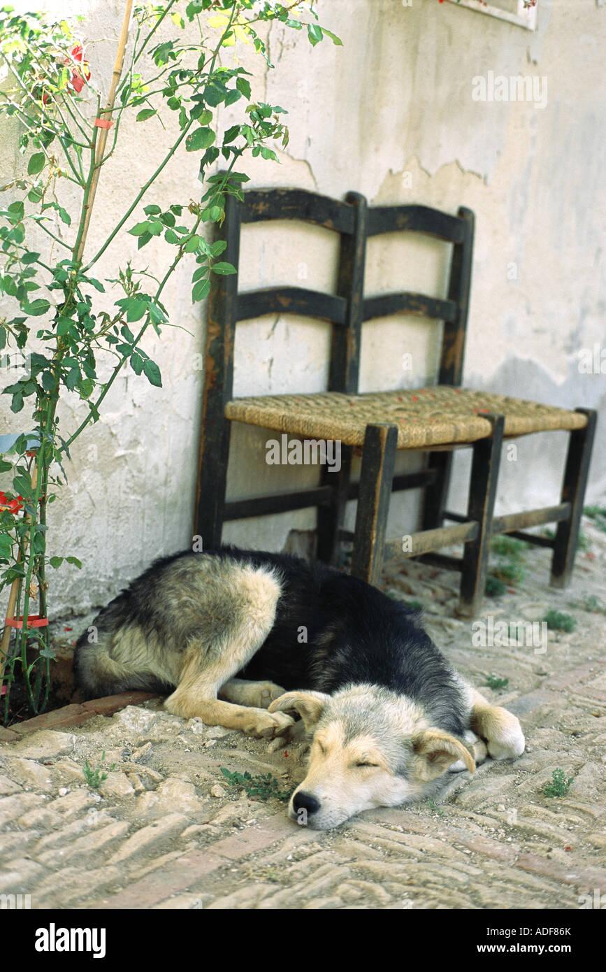 Dog sleeping on patio Stock Photo