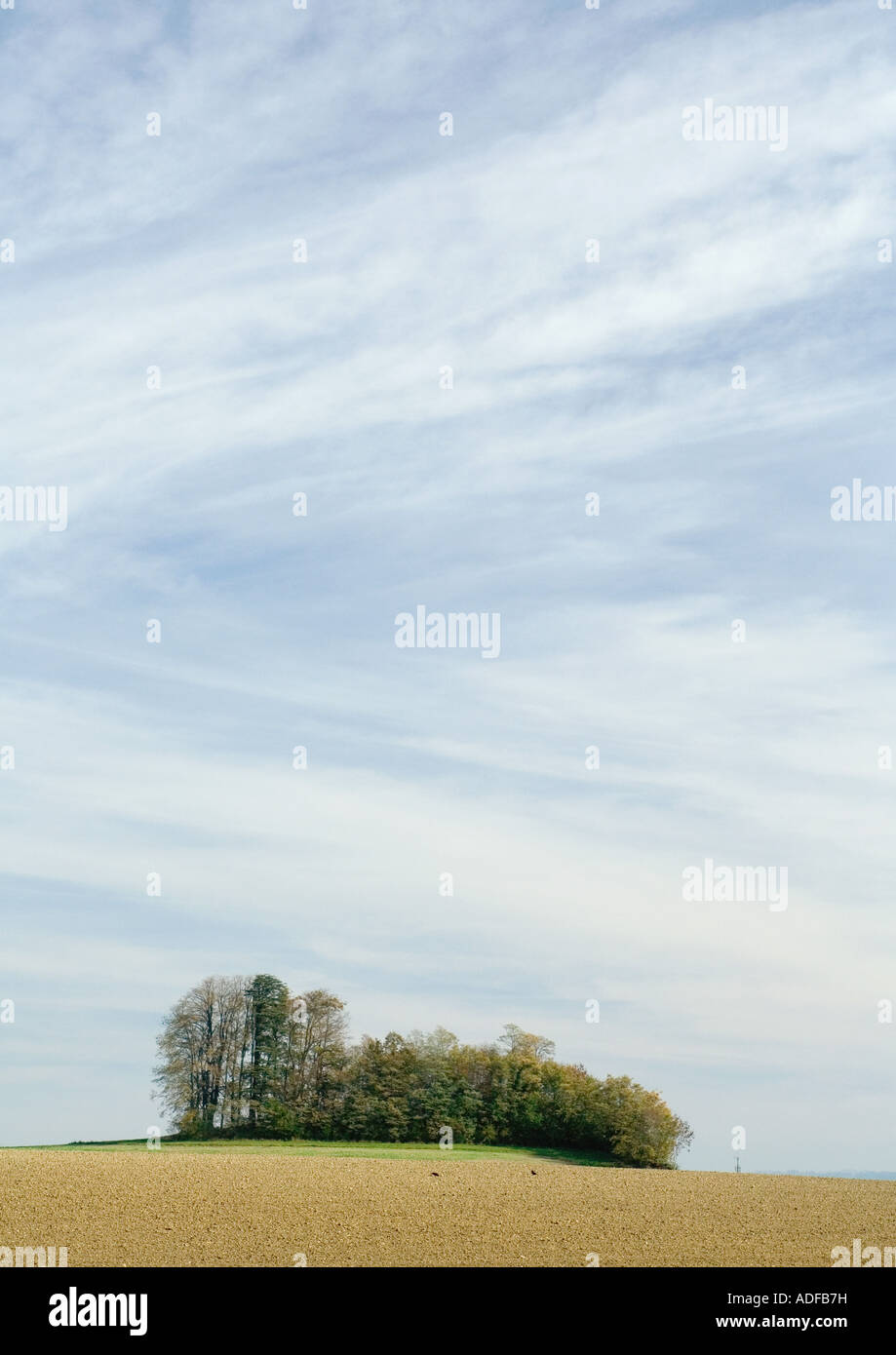 Bare field and grove of trees - Stock Image