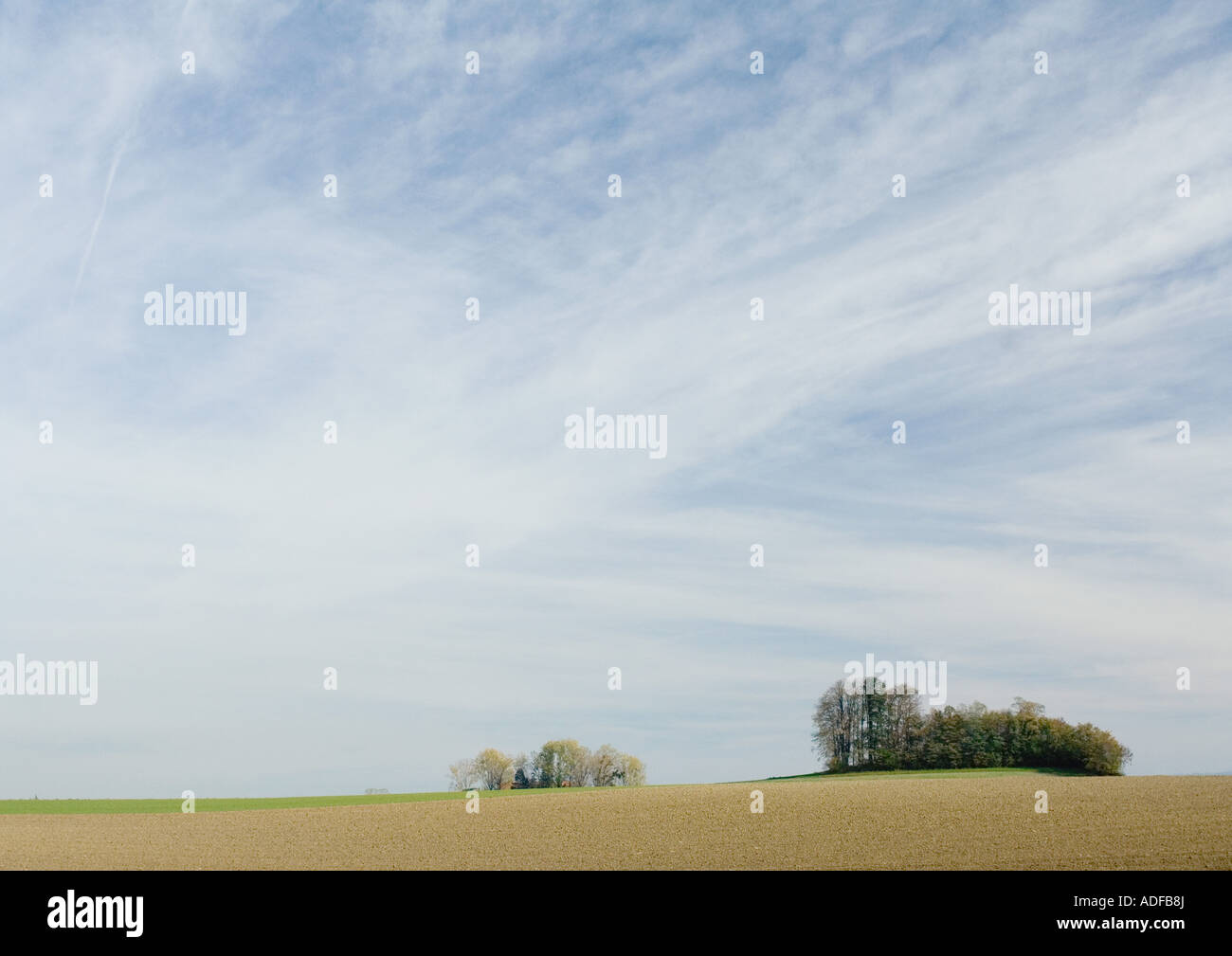 Bare fields and groves of trees - Stock Image
